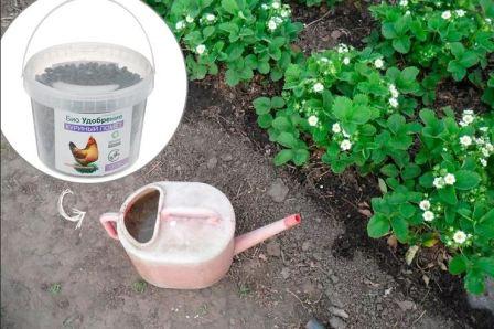 Удобрения для клубники летом