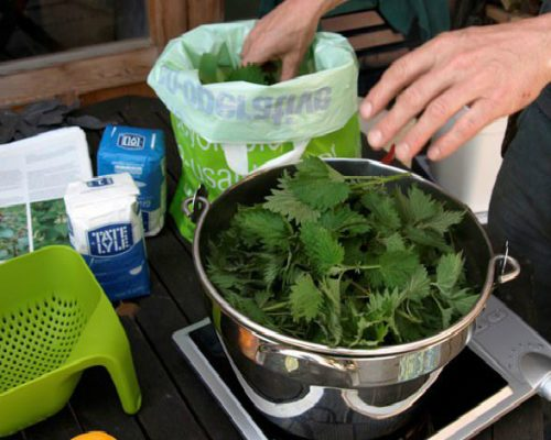 Подкормка клубники осенью какие удобрения выбрать