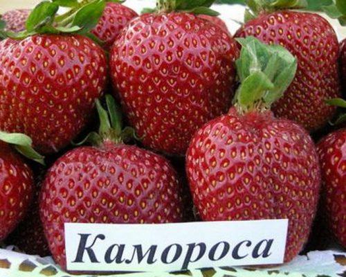 Камароза (Камароса)