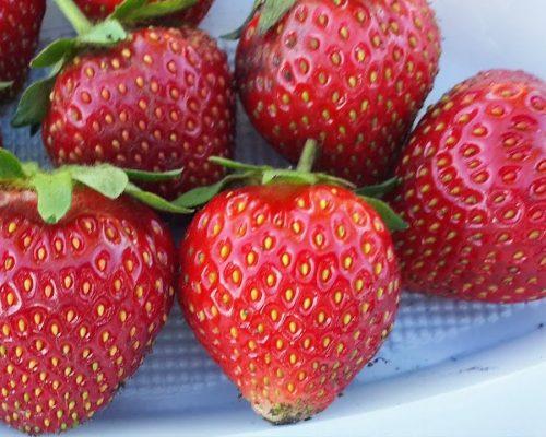 Кончики у первых ягод Эльсанты светлые