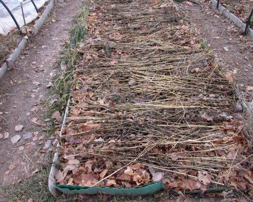 Можно использовать и сухую листву, но не с плодовых, а с лесных деревьев