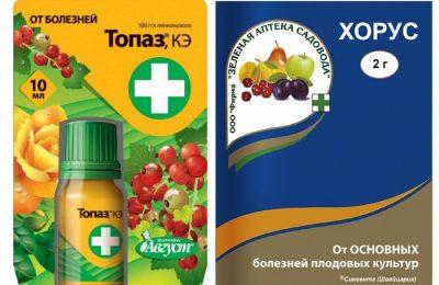 Препараты против болезней клубники – Хорус и Топаз