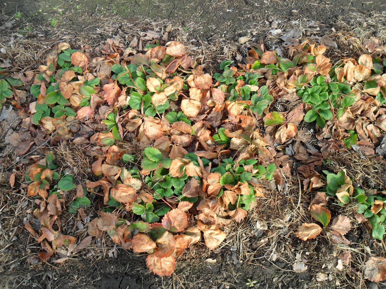 Удаление листвы