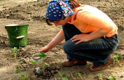 Внесение удобрение весной