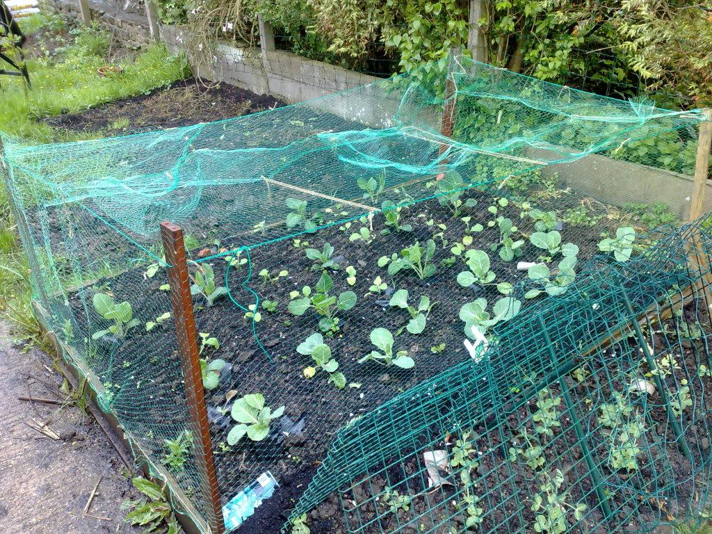 Защита урожая клубники