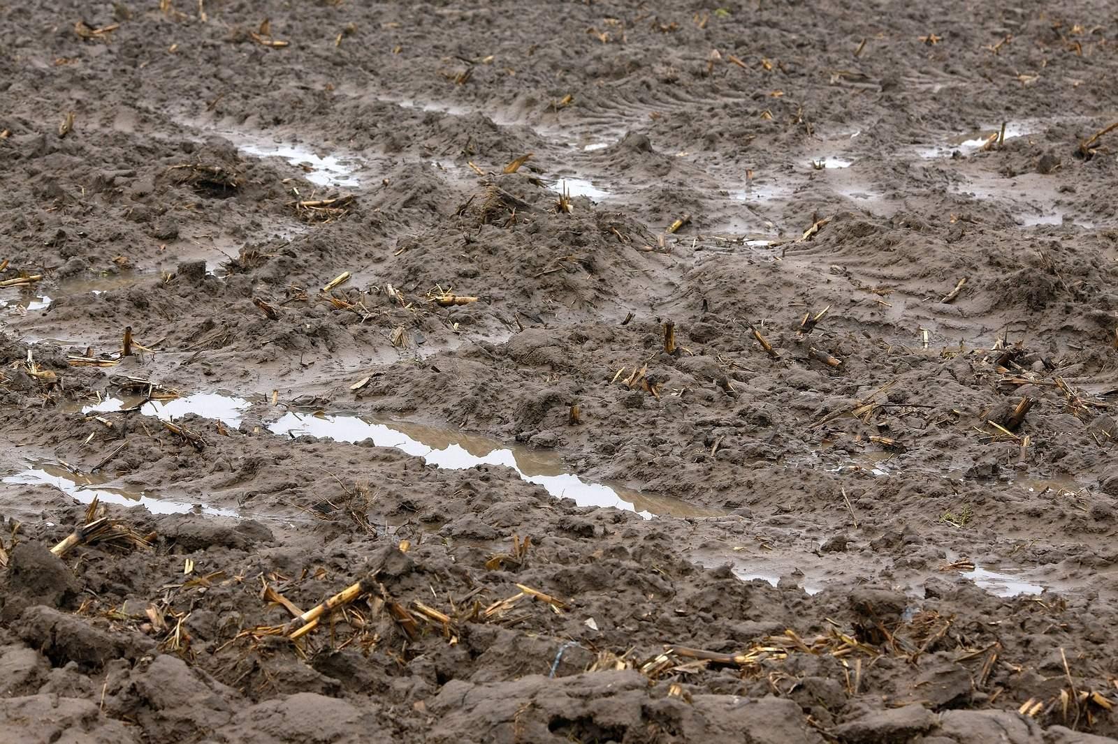 Насыщенную влагой почву невозможно правильно и вовремя подготовить к посадке клубники